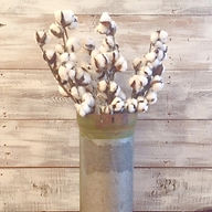 coton stem