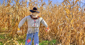scarecrow2_edited.jpg