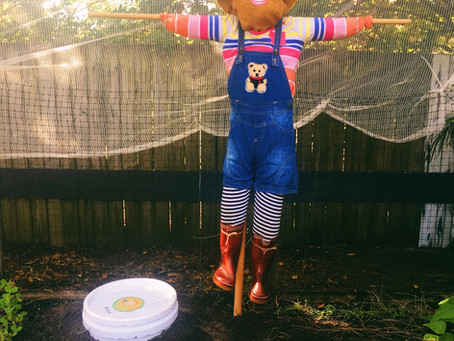 There is a Scarecrow in our Garden!!!