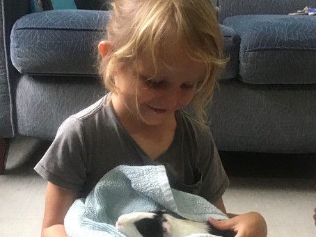Maggie the Guinea Pig's Visit