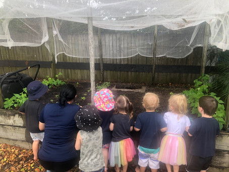 Learning about the Gardens