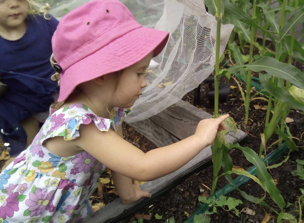 Child Loves plants - Dragonfly's Programs