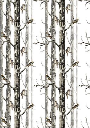 Kookaburras in the woods