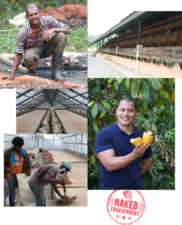 Domincan Republic direct trade cacao