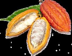 Organic cocoa pod