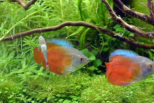 熱帯魚新入荷&流木新入荷&特価水草のご案内‼