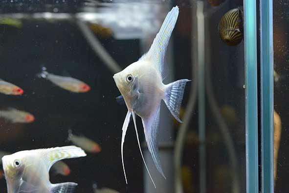 ドーンと熱帯魚入荷情報‼
