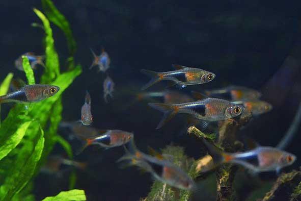 新入荷熱帯魚いろいろ‼