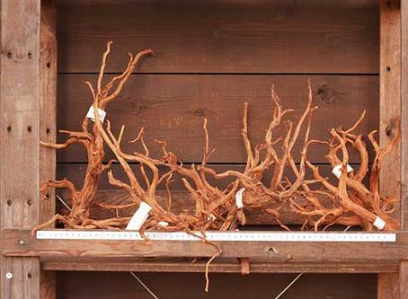 流木、石材入荷‼