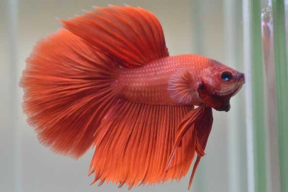 熱帯魚新入荷!