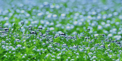 水草水槽 インテリア リシア 気泡