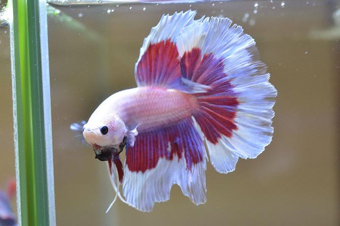 Breathの熱帯魚