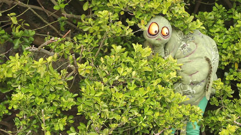 Myrtle in The Bushes