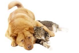Il vomito nel cane e nel gatto: un segno aspecifico spesso sottovalutato