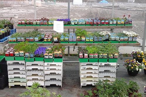 Lot de 10 plantes vivaces