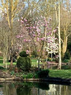 Locations Amiens - gîtes Au-delà des Saules dans les Hortillonnages
