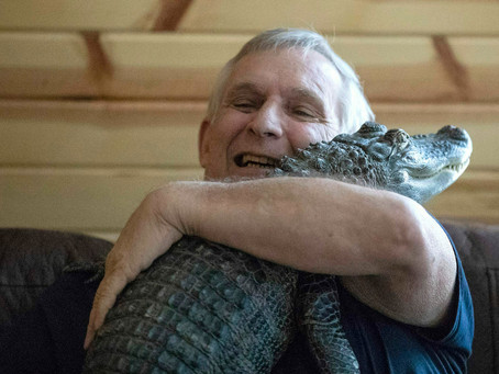 A cold-blooded emotional support gator??