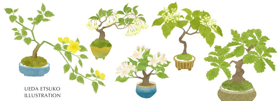 春〜初夏の盆栽
