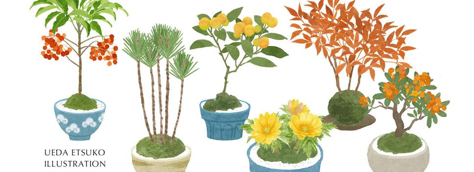 新年の盆栽