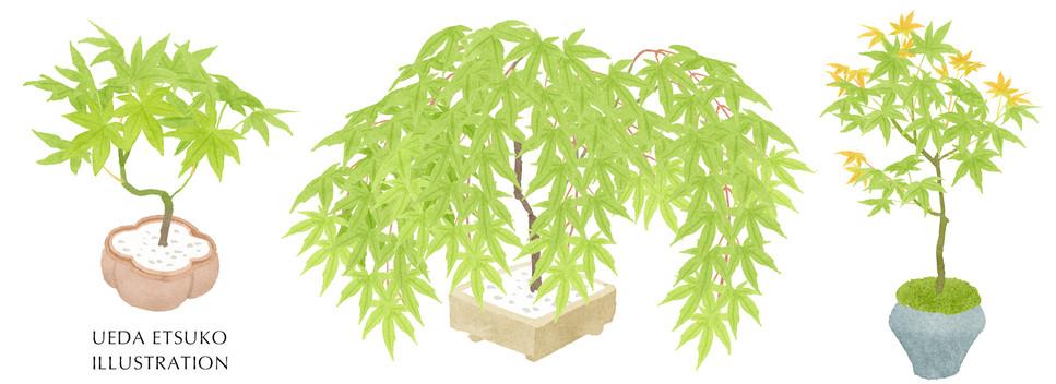 初夏の盆栽