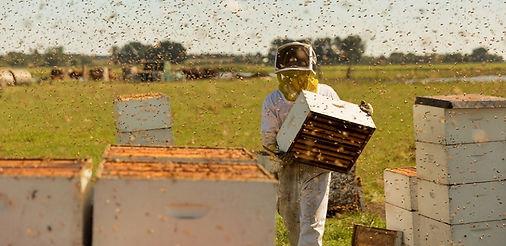 the-pollinators-hero.jpeg