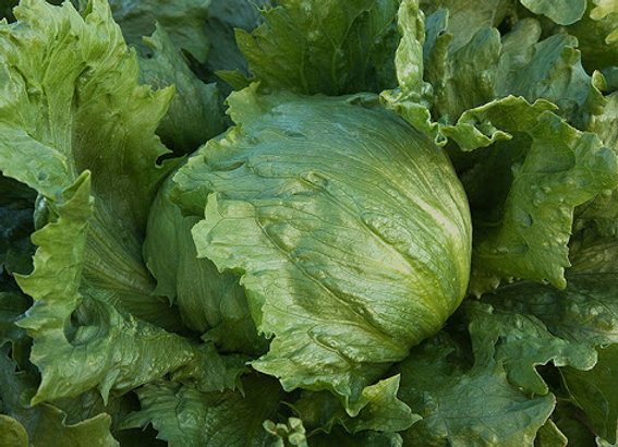 Iceberg Lettuce (per item)