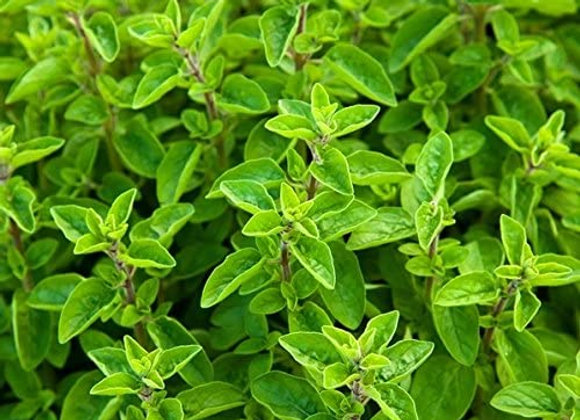 Packet Herbs Majoram (per item)