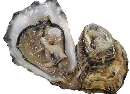 Maldon Oysters (per item)