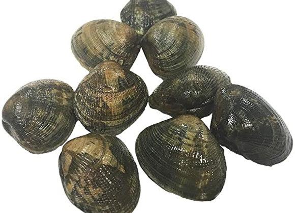 Pallourde Clams (per kg)