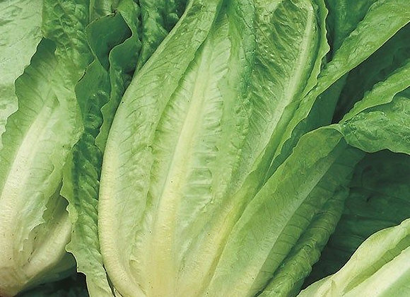 Cos Lettuce (per item)