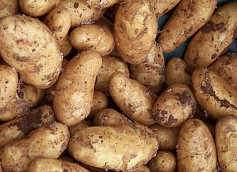 Maris Piper dirty potatoes (per kg)