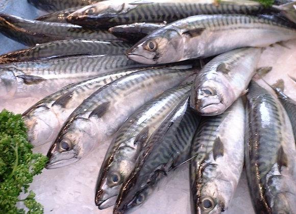 Mackerel (per kg)