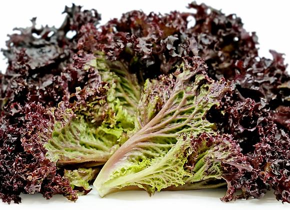 Oak Leaf/Frizee lettuce/Lolla Rosso (per item)