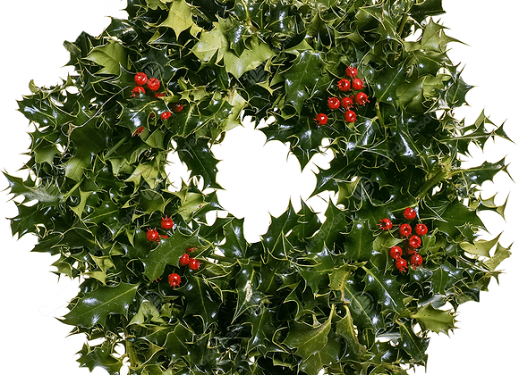 Real Holly wreath with berries