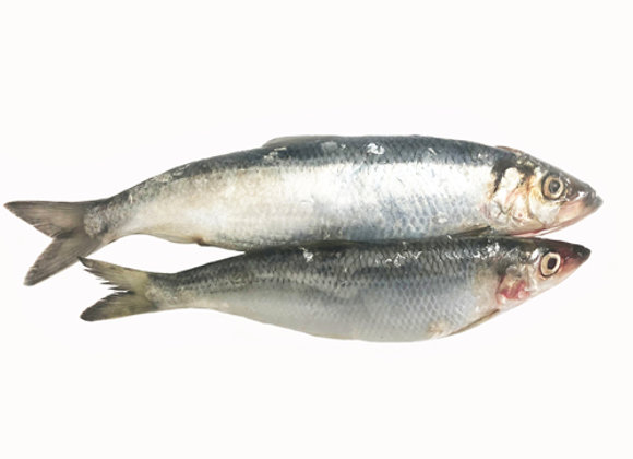 Herrings (per kg)