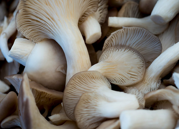 Oyster Mushrooms (per kg)