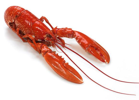 Cooked Norfolk Lobster (per kg)