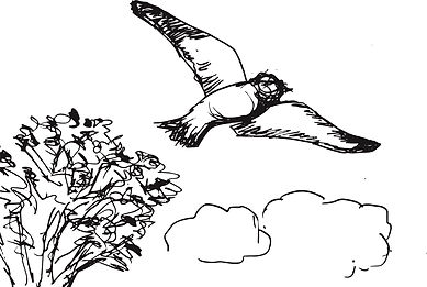 birdplain.jpg