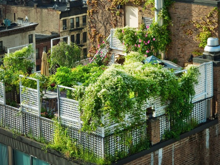 Green roofs improve the quality of urban life - shouldn't all buildings have them?