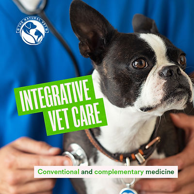 INTEGRATIVE vet care square.jpg