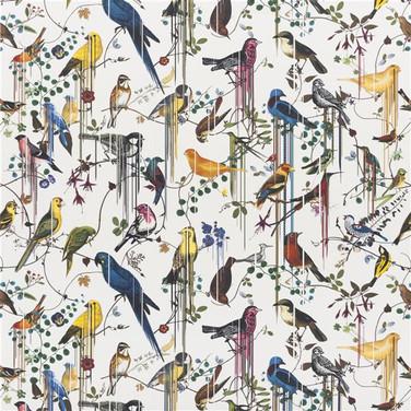 Birds Sinfonia - Perce neige