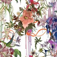 Orchids Fantasia - Perce neige