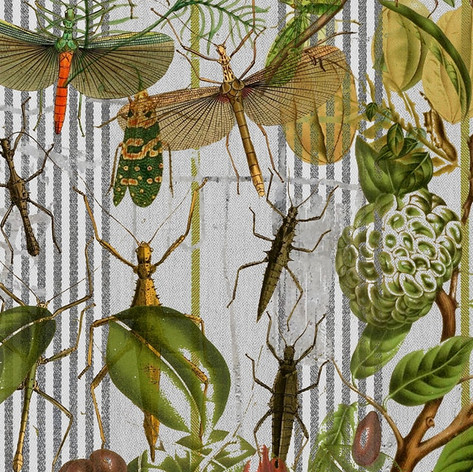 BOTANICAL TICKING BUG MANIA