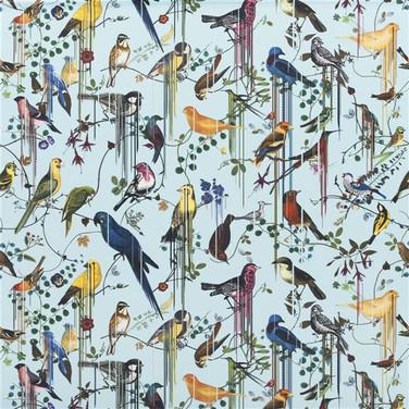 Birds Sinfonia - Source