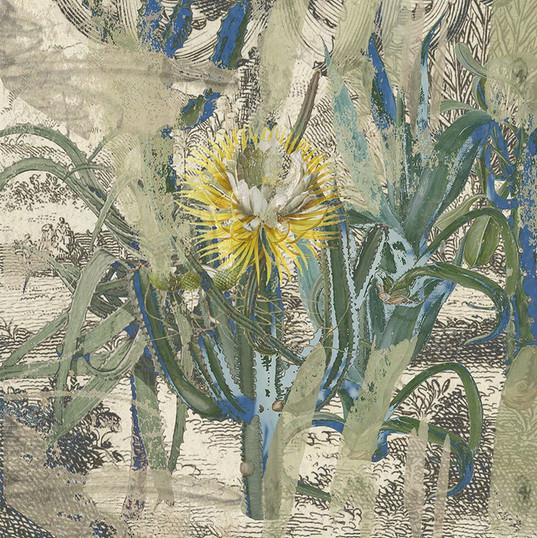 Cactus Garden - in bloom