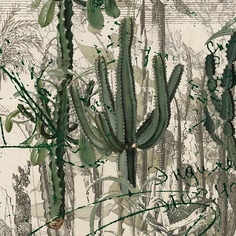Cactus Garden - Looking sharp