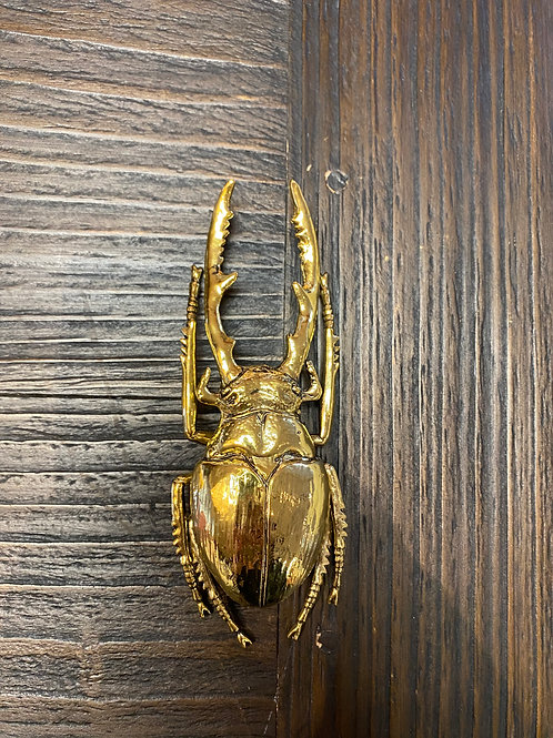 Golden Scarab Beetle