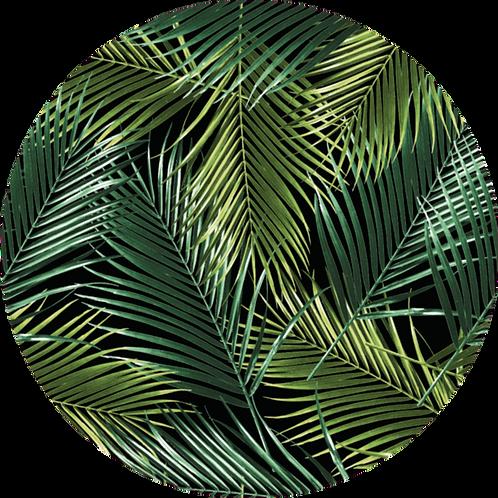 Palmiers Verde