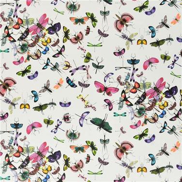 Mariposa - Perroquet