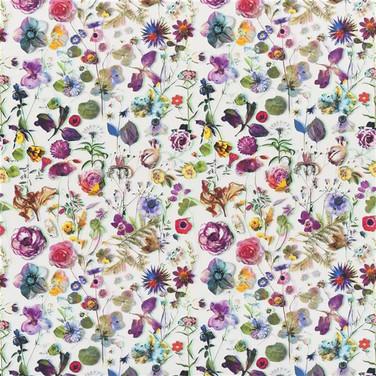 Herbarium - Perce-neige
